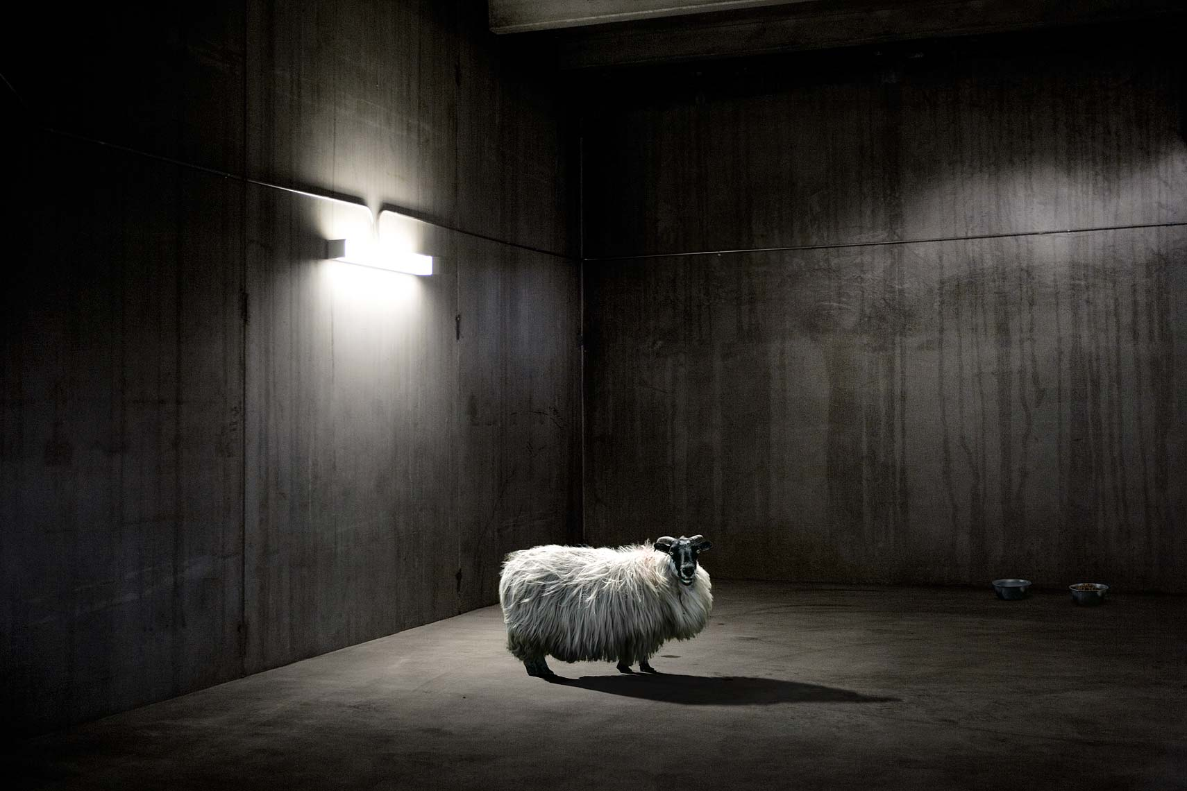 sheep-in-garage-WIP-3-flat
